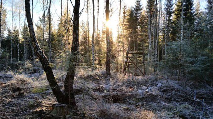 Hochsitz im Wald bei Raureif
