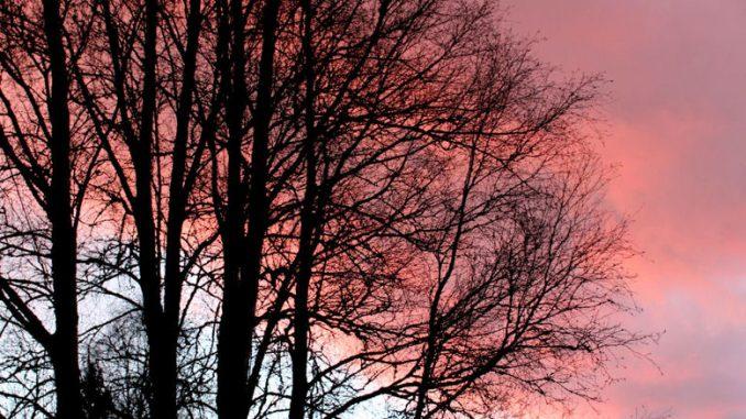 Tiefroter Himmel hinter den Bäumen.