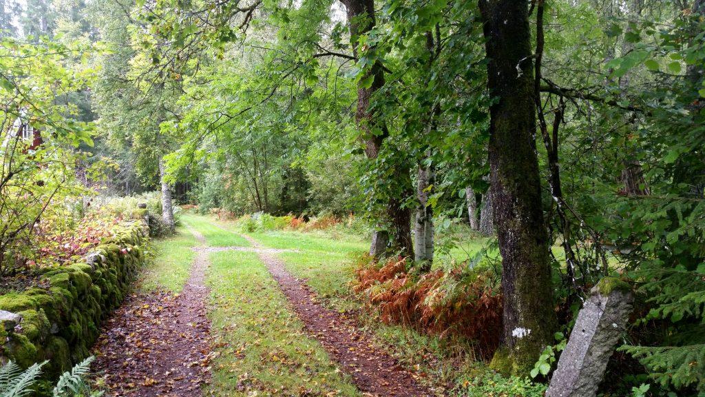 Herbstlicher Waldweg.