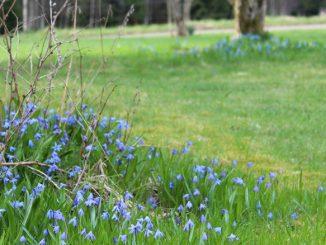 Unser schwedischer Garten.