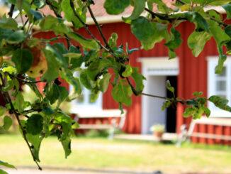 Das Kulturzentrum Linnés Råshult