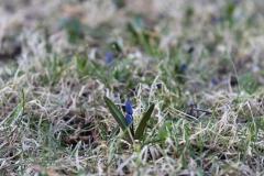 Frühling in Schweden