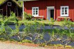SvenskaNyheter_2020-08-13_Schweden_LinnesRashult_02
