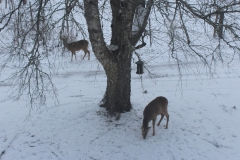 SvenskaNyheter_2018-02-06_Schweden_Rehe_02_1920x1080